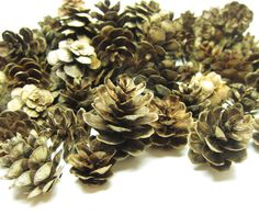 Natural Pine Cones 100 Piece Real Miniature Washington Pine Cones...perfect to scatter on tables at a woodland wedding