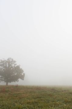 New free photo from Pexels: https://www.pexels.com/photo/tree-on-green-lawn-under-a-foggy-sky-25089/ #nature #sky #fog