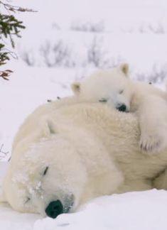 Sooo beautiful!!! Sleep well!