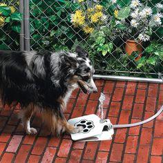 20 idees de cadeaux originaux pour chien robinet a toutou   20 idées de cadeaux originaux pour chien   terrasse piscine photo parapluie nich...