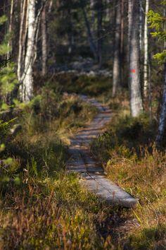 Salamajärven kansallispuisto / Rinkkaputki http://www.stoori.fi/rinkkaputki/salamajarvi/