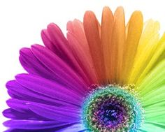 That would be wicked to have all that color in a tattoo! And it's my favorite flower!
