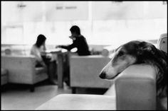 Elliott Erwitt Dogs | Elliott Erwitt, Korea, Seoul, Dog Cafe, 2007