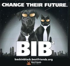 MAY IS ADOPT A BLACK PET MONTH! Statistics show black animals are often overlooked when searching for a pet to adopt. More black animals are euthanized every year than any other color. Do the right thing, RESCUE! Animal Shelter Adoption, Animal Rescue, Pet Adoption, Black Dog Syndrome, Homeless Dogs, Animal Society, Black Animals, Back To Black, Cats And Kittens