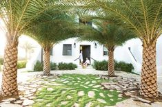 """Bill Musso and Bryan Cooke""""s Alys Beach, Florida, home features exotic palms transplanted from the Canary Islands, which surround a carpet of creeping grasses growing amongst fragments of Cuban stone."""