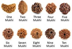 Different Types of Rudraksha Beads and their benefits