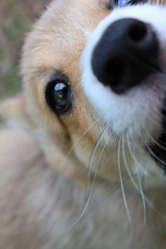 Puppy Attack
