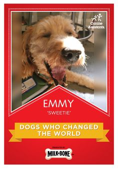 Be awesome today, like Emmy the award-winning canine helper
