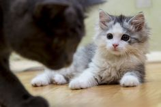 Photo Scared kitten by Yauhen Petruchenia on 500px