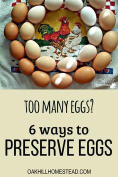 Raising Backyard Chickens, Backyard Chicken Coops, Backyard Farming, Pet Chickens, Chicken Life, Chicken Eggs, Preserving Eggs, Storing Eggs, Goat Milk Recipes