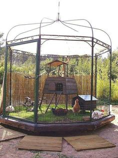 """REPURPOSED gazebo becomes a COOL chicken COOP!"" from Two Women and a Hoe. I like it but am wondering about the cleaning, also it's got to be brand new because there is still green, growing grass in it!"