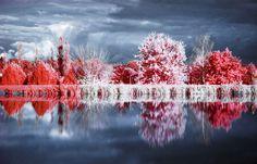 Infrared Photography - Infrared Photography Blog