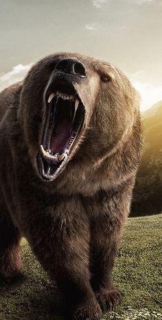 Cacería Ilegal pone en Peligro al Oso Grizzly en Alaska - Tiere - Wild Animals Photography, Wildlife Photography, Beach Photography, Photography Camera, Photography Tips, Bear Pictures, Animal Pictures, Awsome Pictures, Wild Life