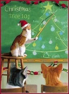 dallas tried getting my ornaments off the tree last night