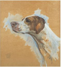 Head Study of an American Pointer by Maud Earl, 1932