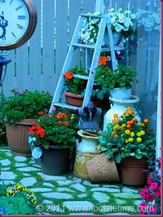 Old ladder as plant stand surrounded by containers...