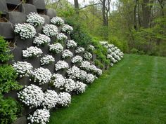 Smart Slope living retaining walls allow you to provide structural retention from 50 to 70 degrees. Rather than looking at a retaining wall, the hardscape becomes greenscape - it disappears behind vegetation.
