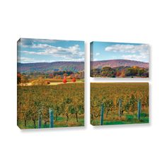 Vineyard in Autumn by Steve Ainsworth 3 Piece Photographic Print on Gallery Wrapped Canvas Set