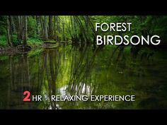 Forest Birdsong - Relaxing Nature Sounds - Birds Chirping - REALTIME - NO LOOP - 2 Hours - HD 1080p - YouTube