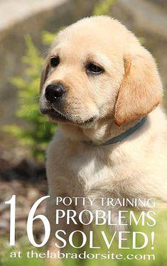 Puppy Potty Training Tips, Training Your Dog, Leash Training, Toilet Training, Labrador Puppy Training, Training Pads, Training Collar, Doge, Funny Videos