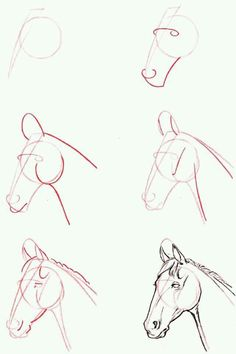 How to draw a horse head. Horse sketch step by step. Drawing Lessons, Drawing Techniques, Learn Drawing, Easy Drawings, Pencil Drawings, Easy Animal Drawings, Pencil Art, Horse Sketch, Horse Drawings