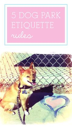 5 Dog Park Etiquette Rules You Should Never, Ever Break Cute Dog Pictures, Dogs And Puppies, Doggies, Dog Park, Etiquette, Animals And Pets, Cute Dogs, Your Pet, Fun