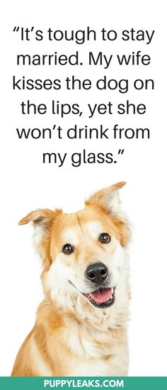 30 Cute & Funny Dog Quotes. List of the 30 funniest quotes about dogs. #dogs #doglovers #funnyquotes #quotes