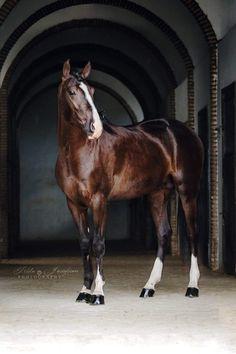 BOLÉRO Owner: Clémence Faivre, Equestrian Art & Show, France ©Tilda Josefsson photography