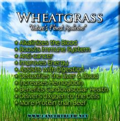 Wheatgrass can help you from the inside out. Taken daily will hell boost your energy throughtout the day