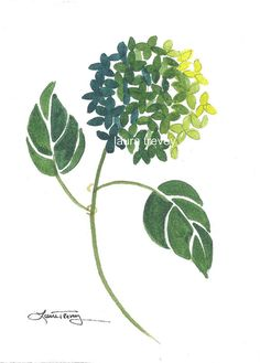 green hydrangea watercolor painting
