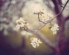 eye poetry - the photo blog of fine art photographer Irene Suchocki: May 2012