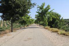 via verde del aceite