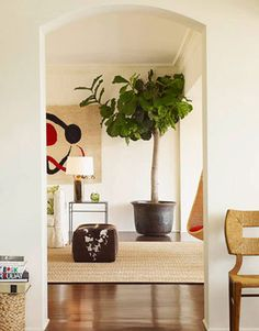 I love the large leaves of a Fiddle Leaf Fig or Ficus Lyrata. And other design-minded folks love them too! Indoor Trees, Indoor Plants, Potted Plants, Ficus Lyrata, Style Californien, Fiddle Leaf Fig Tree, Interior Plants, California Style, Trees To Plant