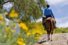 Are You Untraining Your Horse?~Four things you're probably letting your horse get away with, and how to stop it.