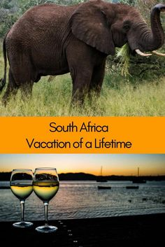 South Africa | Dream Vacation | Cape Town | Cape Winelands | Garden Route | Kruger National Park | Johannesburg #SouthAfrica #SouthAfricaTravel #DreamVacation