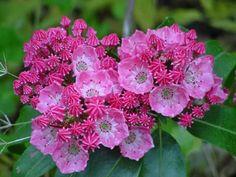 http://www.saundersbrothers.com/_ccLib/image/plants/DETA-823.jpg