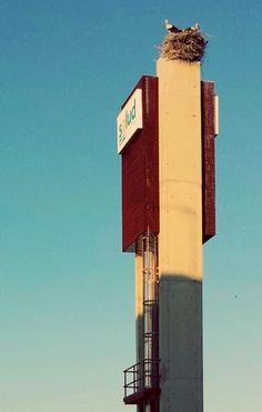 #cigüeñas del Hospital de Alcañiz