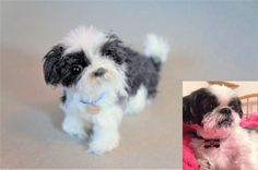 This family lost their beloved Shih Tzu so they had me felted this mini replica. 5 inches long.  #JanetsNeedleFelting #ShihTzu #handmade #petportrait #petmemorial #pet #arts