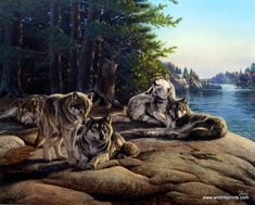 Artist Al Agnew Unframed Wildlife wolf Pack Print Wolf Ridge | WildlifePrints.com