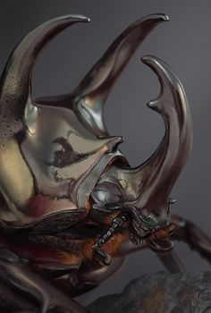 Rhinoceros Beetle Study, Xavier Leroux on ArtStation at… Rhino Beetle, Beetle Insect, Insect Art, Cool Insects, Bugs And Insects, Cool Bugs, Insect Photography, Beautiful Bugs, Creature Concept