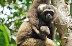 Si vous choisissez Bali Autrement pour votre séjour en Indonésie, c'est que vous êtes conscients qu'il devient primordial aujourd'hui de voyager de façon responsable. Et être un voyageur responsable implique de respecter ses hôtes, leur culture, leurs traditions et leur environnement. Hui, Culture, Animals, Wayfarer, Environment, Animales, Animaux, Animal, Animais