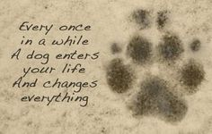 Every once in a while a dog enters your life and changes everything.