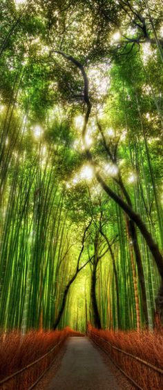 Bamboo forest, Kyoto Japan - Travel Photography