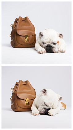 Girl's Best Friend: Milly with Ralph Lauren.  #barkdorfs in collaboration with PurseBlog.  Photo by Vlad Dusil