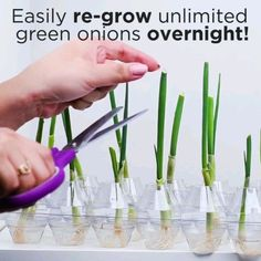 Amazing, I love this green onions - Cuidado de plantas - Plants Garden Yard Ideas, Garden Crafts, Indoor Garden, Garden Projects, Indoor Plants, Growing Plants, Growing Vegetables, Regrow Vegetables, Container Gardening