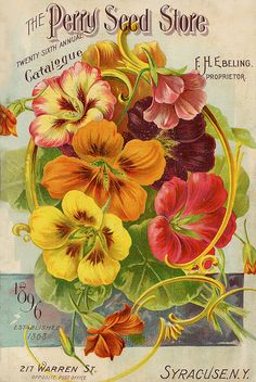 Perry 1896, vintage flower, illustratation, floral, seed, packet