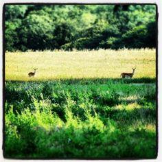 Epping Forest, Fallow Deer, Walking Boots, Walks, Country Roads, Hiking Boots, Walking Shoes, Hiking Shoes, Woking
