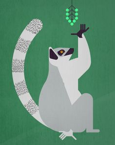 20 x 28 Ring-tailed Lemur portrait on rocks in the Andringitra Mountains vulnerable south central Madagasc Poster Print by Pete Oxford