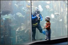 Dive at the Two Oceans Aquarium in Cape Town