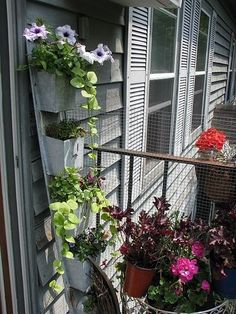 MY balcony garden !